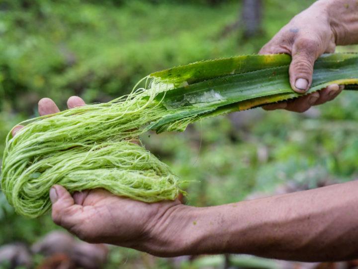 Pinatex – Warum es kein Ananasleder ist